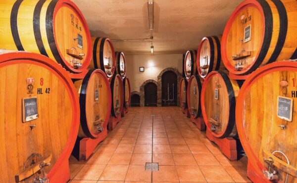 Winecellar at Martoccia di Brunelli